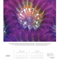 2014 Chroma Calendar: Coral - Page 2